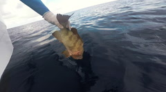 Fisherman Releasing Grouper Into The Ocean Stock Footage
