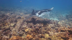 Manta Ray in Deep Blue Sea Stock Footage