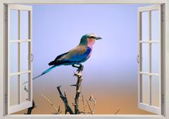 Lilac breasted roller Stock Photos
