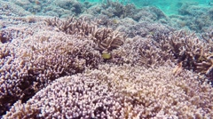 Snorkeling in Indonesian sea Stock Footage