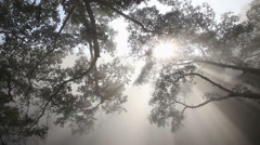 Foggy sunshine during sunrise in jungle Stock Footage