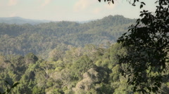 Panoramic View Of The Lush Tropical Plants Stock Footage