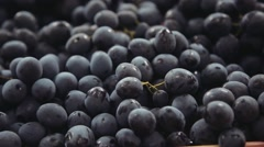 Dark blue grapes. Bunches of grapes Stock Footage