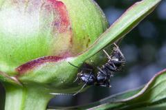 Details of ant - stock photo