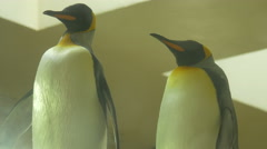 View of penguins standing at Schonbrunn Zoo Stock Footage