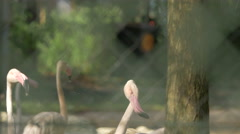 Beautiful view of flamingos seen through a fence at Schonbrunn Zoo Stock Footage