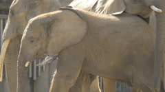 View of three elefants standing at Schonbrunn Zoo Stock Footage
