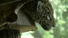 Schonbrunn Zoo Stock Footage