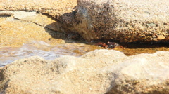 Crabs on the Rocks near the Sea Stock Footage