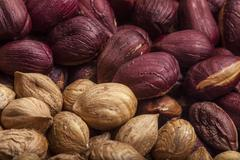 Hazelnuts close up of on a wooden bowl Stock Photos