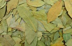 laurel leaves texture - stock photo