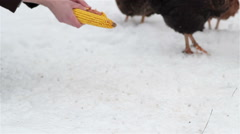Feed chickens in winter Stock Footage