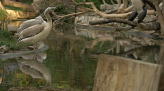 Beautiful birds sitting near the water at Schonbrunn Zoo Stock Footage