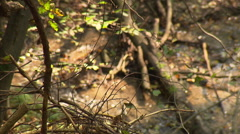 Brook in deep forest with tree in the foreground Stock Footage
