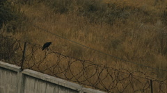 Crow on a prison fence Stock Footage