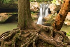 Exposed tree roots in front of Upper Falls at Hocking Hills State Park, Ohio. Stock Photos