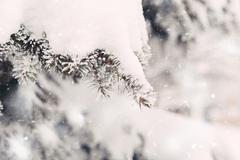 Snow on the fir-tree branches in winter Stock Photos