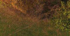 Autumn grass field next to a forest with stone road and kids playing Stock Footage