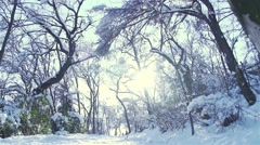 The sun illuminates the snowy path with trees in winter in slow motion Stock Footage