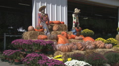 Scarecrows overlooking a display of pumpkins and fall flowers Stock Footage