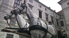 A pair of gray horses in harness on a Vienna street Stock Footage
