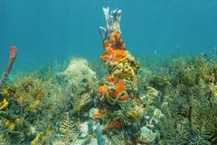 Caribbean coral reef with colorful marine life Stock Photos