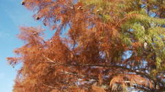 Autumn foliage on trees along a meandering stream through a park - stock footage