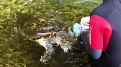 Sea turtle eats by hand feeding Stock Footage