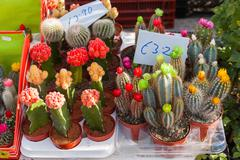 Different spices of cactuses with prices. Showcase of flower shop. Marsaxlokk Stock Photos