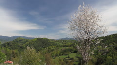 Lonely blooming plum near village of Gudevitsa in Rhodope mountain. Early spring Stock Footage