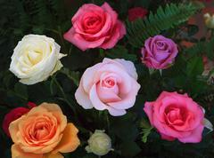 Close up beautiful variety color of blooming roses flower bouquet decorated w Kuvituskuvat