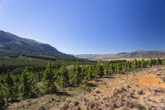 Forestry Trees Landscape Stock Photos