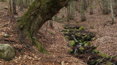 Stream in the forrest flows over mossy rocks and old trees in Rhodope mountain, Stock Footage