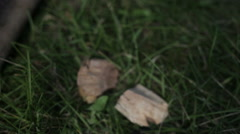 Pieces of wood on the grass close up Stock Footage
