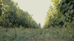 Beautiful girl walking along the rows of of the vineyard Stock Footage