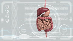 digestive system, intestines on HUD futuristic background - stock footage