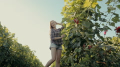 Lovely girl harvests the grape Stock Footage