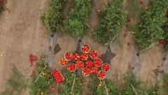 Aerial view of potato baskets in the middle of potato field Stock Footage