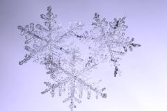 Real natural snowflakes on glass macro photo Stock Photos