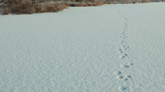 Dog traces on the snow. Clean and frosty daytime. Smooth dolly shot. Stock Footage
