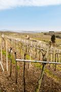 Vineyards and farmland on the hills in spring. - stock photo