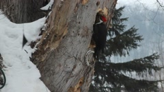 Young Pileated woodpecker Stock Footage