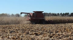 Harvesting Autumn corn Stock Footage