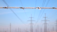 White frost fall down from barbed wire, slow motion shot, close up view. Stock Footage