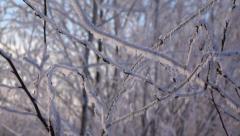 Frozen bush branch, hoarfrost fall down, close up slow motion shot Stock Footage