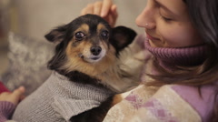Small dog loves mistress - stock footage