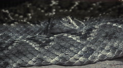 ULTRA HD 4K, real time, zoom;close up of an a snake with its head Stock Footage