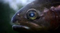 Exotic fish in aquarium - stock footage