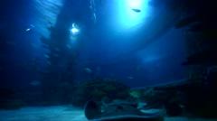 Large amount of fish feeding Stock Footage