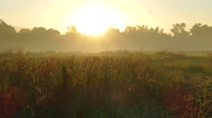 Farmland sunrise landscape in the Philippines - stock footage